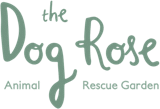The Dog Rose